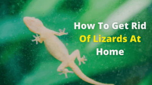 How To Get Rid Of Lizards At Home Naturally