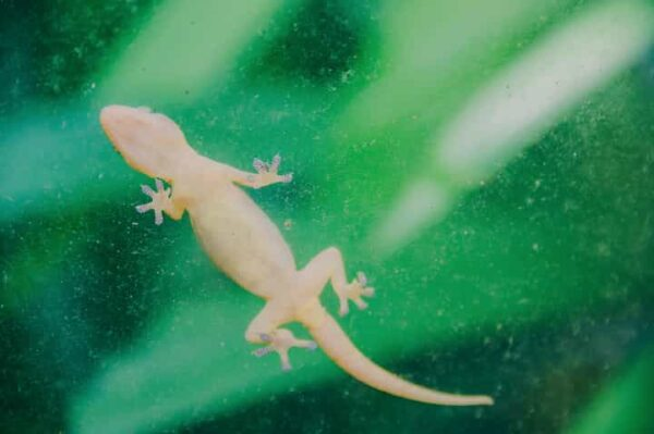 How To Get Rid Of Lizards At Home